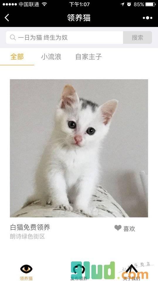 领养猫截图1