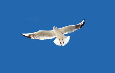云南蓝色天空主题游微信小程序